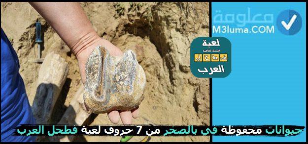 حيوانات محفوظة في بالصخر من 7 حروف لعبة فطحل العرب