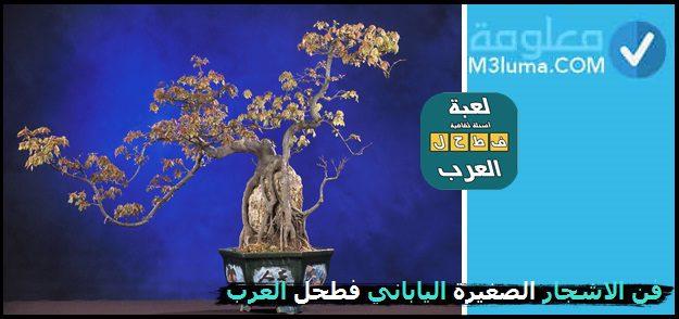 فن الاشجار الصغيرة الياباني فطحل العرب