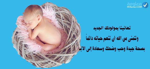 مبروك المولود | معلومات
